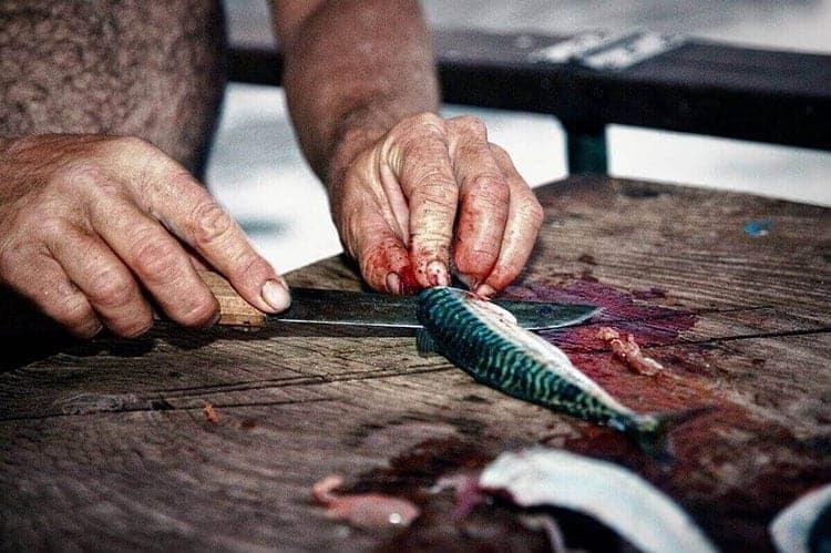 Boning Knife Vs Fillet Knife